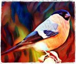 Bull finch bird