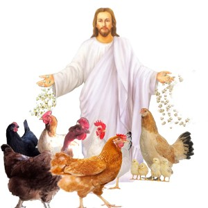 Jesus feeding chickens