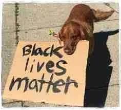 Black lives matter dog