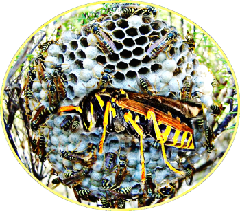 Remove bees, wasps, or hornets without getting stung – Animals 24-7