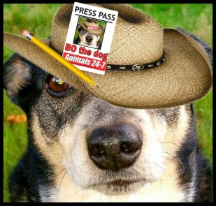 Bo the reporter