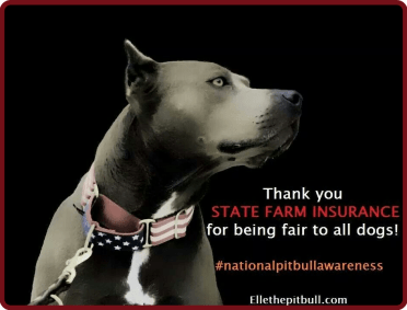 Insuring Pit Bulls State Farm Pays Out Double The Norm For Dog Attacks Animals 24 7
