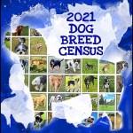 2021 dog breed census