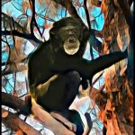 Sheriffs ignored chimp in their own back yard until they shot him