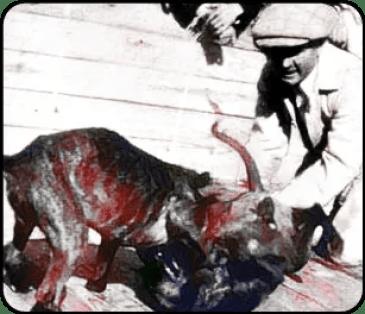 Dogfighter & pit bull breeder Earl Tudor