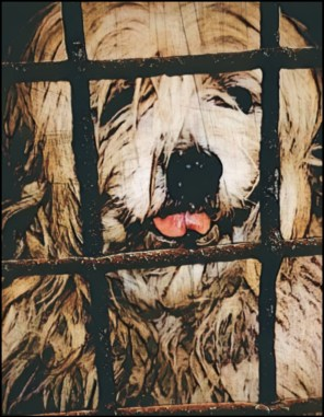 Neglected dog in a cage