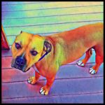 The Killer Dog Problem,  by Charles Danten