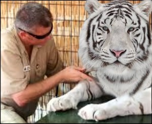 Marcus Cook Exotic animal dealer with white tiger