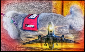 Service dog poodle airplane Beth Clifton collage
