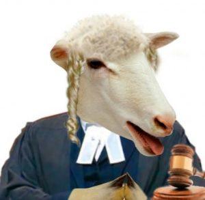 Sheep judge