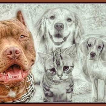 Pushing bully behavior: the ASPCA, Best Friends, & HSUS in Springfield