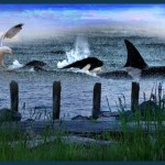 Exploiting starving orcas to push a boondoggle