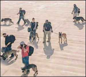 U.S. military dogs being evacuated