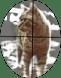 Cat in crosshair