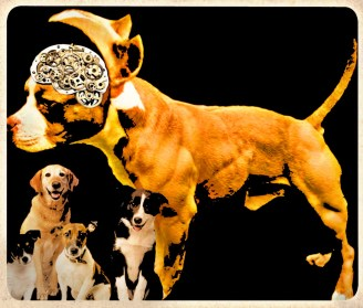 Dog brain study refutes every major claim of pit bull