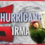 Hurricane Irma:  how wildlife endured
