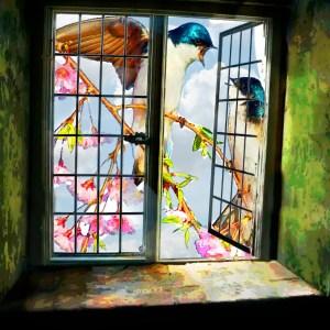Birds & window