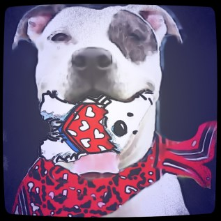 Pit bull with dog in mouth
