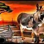 Bleak future for Kenya donkeys, sold to slaughter or left to go feral
