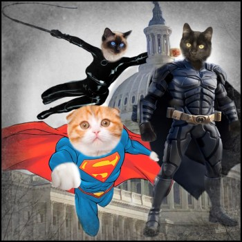 DC cat count with DC comics