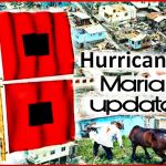 Hurricane Maria:  first reports about animal aid from Puerto Rico