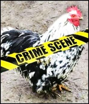 crime scene hen