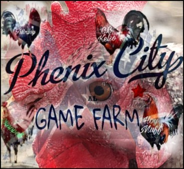 Phenix City rooster game Farm collage