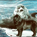 The best news of 2021 for North Atlantic seals,  whales,  & dolphins