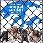 19 dead puppies & $12,000 in fines,  but shelter director says he'd do it again?