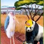 $10 billion from China buys big changes in Kenya wildlife tourism