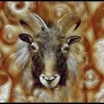 Snail & mountain goat race toward extinction in New Zealand Alps