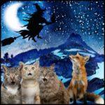 Witch hunts & wildlife