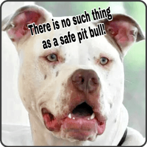 Trooper. See Why pit bulls will break your heart.