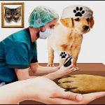 How to heal pets,  heal the humane community,  & heal the veterinary profession