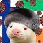 COVID-19 skins fur trade:  Ireland bans fur farming;  Finland vaccinates mink