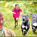"""Shelter """"loses"""" two pit bulls after Maine Supreme Court orders euthanasia"""