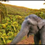 "Lost in translation: ""personhood"" verdict reportedly won for elephant"