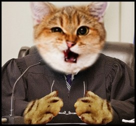 Judge cat