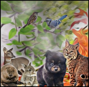 Animals & fire by Beth Clifton