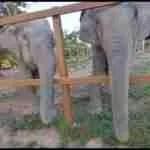"""Elephant whisperer"" Marianus Topno,  48"