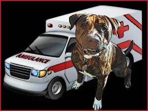 pit bull & ambulance