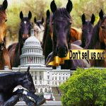 Will anti-show horse soring bill pull up lame through last-hurdle compromise?