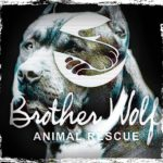 "Brother Wolf: ""Warehousing is not working,"" says director of no-kill experiment"