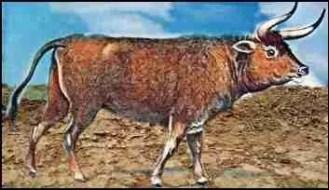 Auroch prehistoric mammal