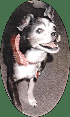 Hazel Mortensen's dog Penny.