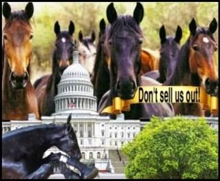 Walking horses in D.C.