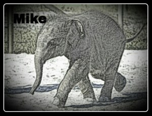 In memoriam, Mike. (Adapted from Ringling image)