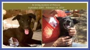 Erika Abrams' memorial to a favorite dog. (Animal Aid photo)