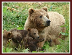 (WSU Bear Center photo)