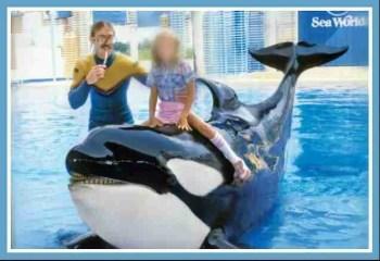 """A SeaWorld """"Shamu"""" show."""